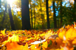 autunno_colli_euganei